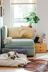 Furniture and a dog