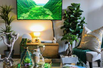 -Rental apartment decoration tips- plants