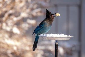 A bird feeding from a bird feeder
