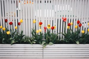 Adding a new fence is one of the ways to reshape your backyard on a budget