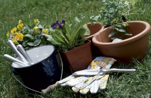 pots and flowers with gardening equipment on the ground
