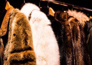 Preparing for packing fur coats