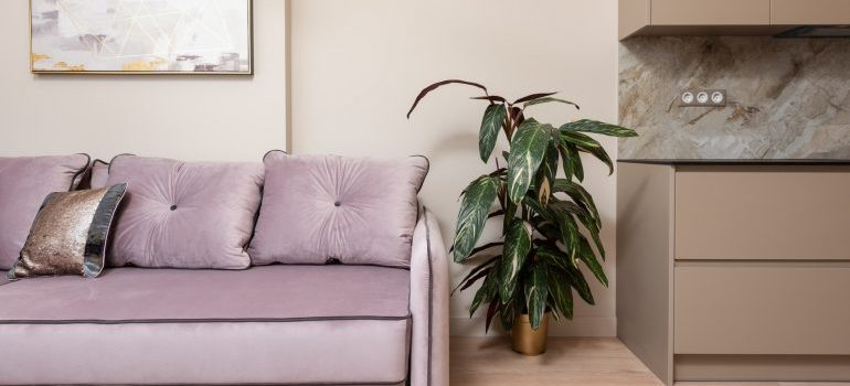 Plant in a room.